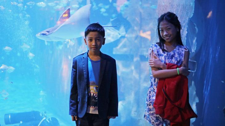 Explore the Aquaria Phuket | The best aquarium to visit with kids